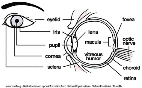 diagram mata eye complications anatomy