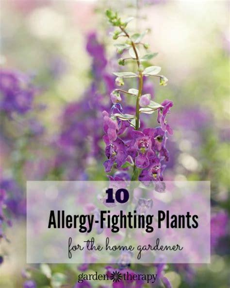 top allergy fighting plants   home gardener