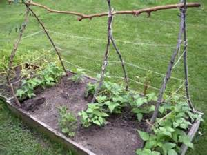 trellis for green beans 7 green bean trellis ideas