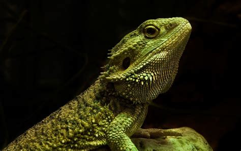Reptile 3d Backgrounds