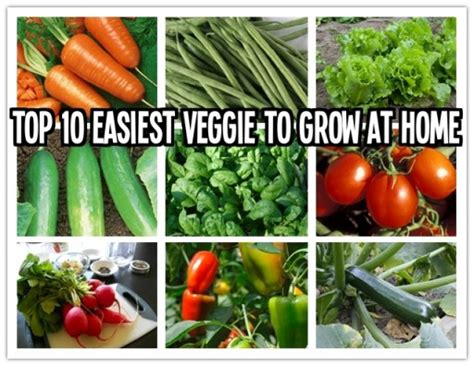 top 10 easiest vegetables to grow at home how to