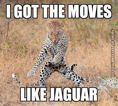 Jaguar Quotes This Jaguar Got The Pics