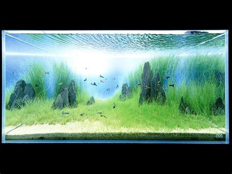 takashi amano aquascape takashi amano aquarium pinterest aquascaping