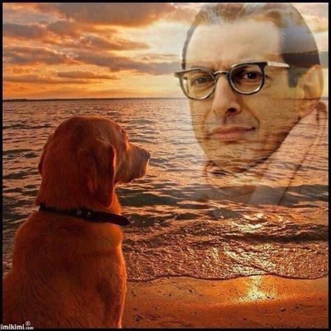 Jeff Goldblum Meme - 15 best simply jeff goldblum images on pinterest artists