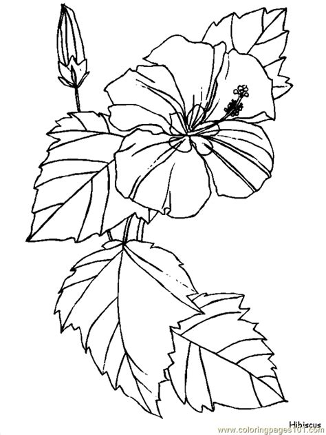 coloring page hibiscus flower flower coloring pages hibiscus coloring page free