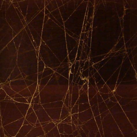 spider web pattern photoshop seamless spiderweb textures fbrushes