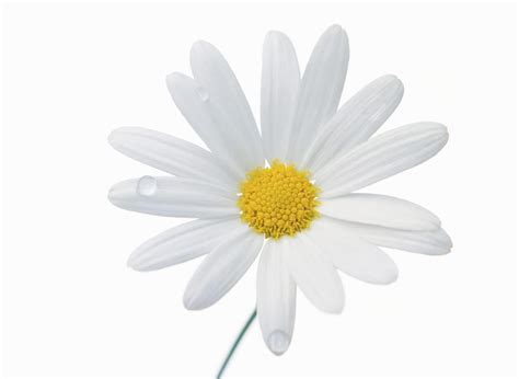 white flower images beautiful white flower weneedfun