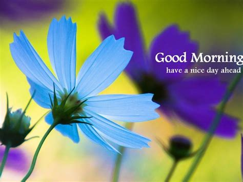 blue morning blue day morning wishes with flowers pictures images page 3