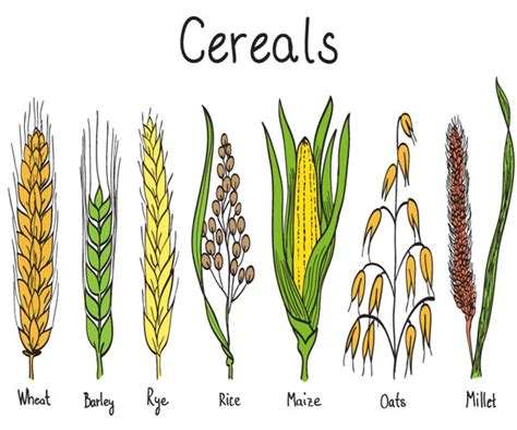 whole grains a z whole grains mondelēz nutrition science