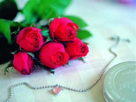 images of love roses the rose of love roses wallpaper 13967045 fanpop