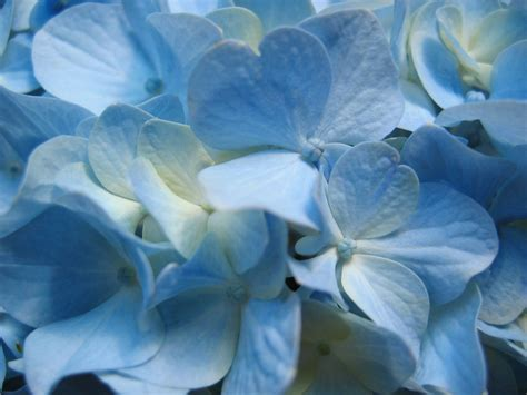 wallpaper blue floral flowers wallpapers