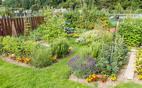 Fruit And Vegetable Garden Layout How To Build A Potager Vegetable Garden With Herbs And Flowers What Plants To Use Better