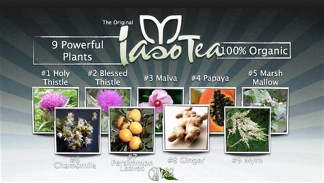 Side Effects Of Iaso Detox Tea by Iaso Detox Tea Gets Results Total Changes Iaso Tea