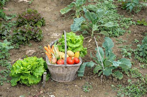 edible gardens millennium ark news