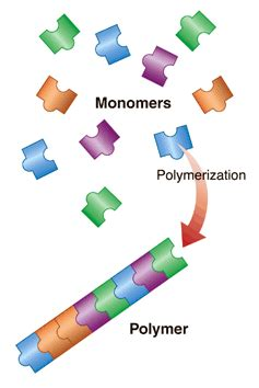 carbohydrates 2007 articles image gallery lipids and proteins