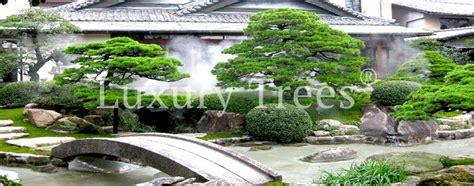 japanischer garten modern ihr japanischer garten luxurytrees 174 ideen planung