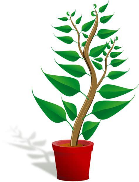 desenho de plantas plant in pot clip at clker vector clip