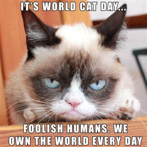 The Grumpy Cat Memes - grumpy cat quotes funny grumpy cat grumpy cat meme