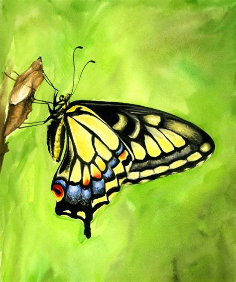 swallowtail butterfly by ethan carl on deviantart