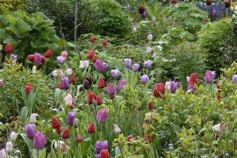 Garten Im Frühling by Garten Im Fruhling Buntes Blumenbeet Anlegen Spinjo Info