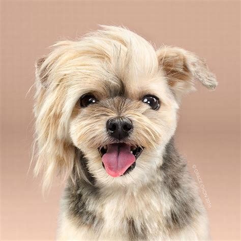 human hair dog cut pics interactive give these cuddly dogs a fur cut cute