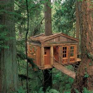 Bed And Breakfast In Eureka Springs Magic Tree House In The Middle Of A Fir Forest And Few