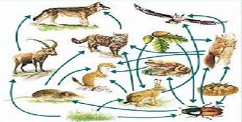 concepto de cadenas y redes alimentarias biolog 237 a monografias