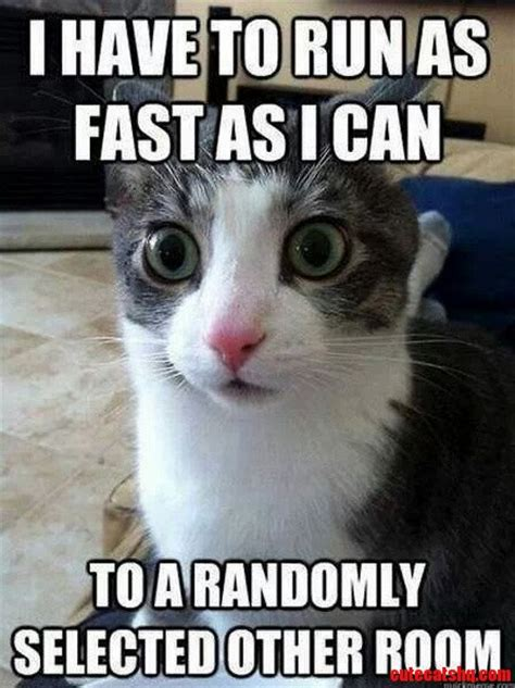 Random Cat Meme - crazy cats cute cats hq pictures of cute cats and