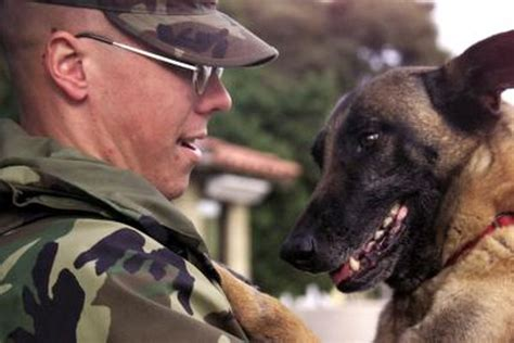 dogs recognize  masters   long absence pets