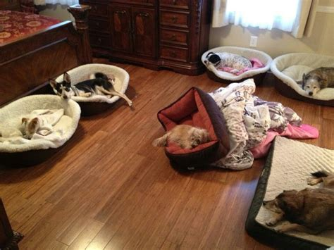 No Chew Bed by No Chew Bed Great Ideas
