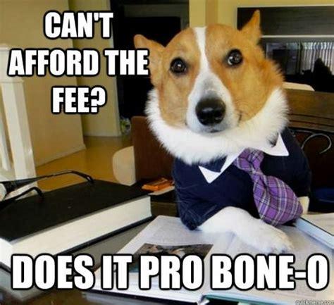 Lawyer Dog Meme - lawyer dog meme roaring corgi