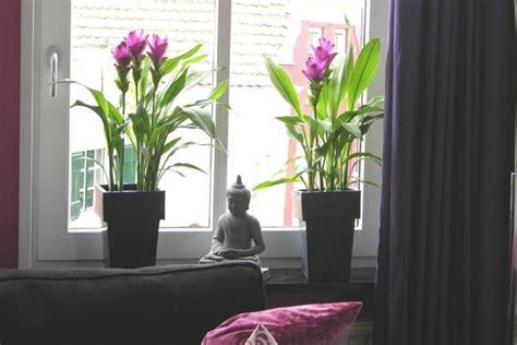 fensterbrett pflanzen curcuma pflanze als zimmerpflanze garten innendesign