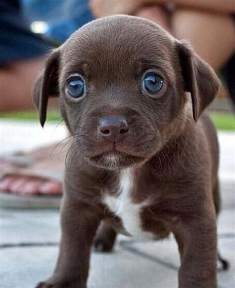 puppy blues puppy blue
