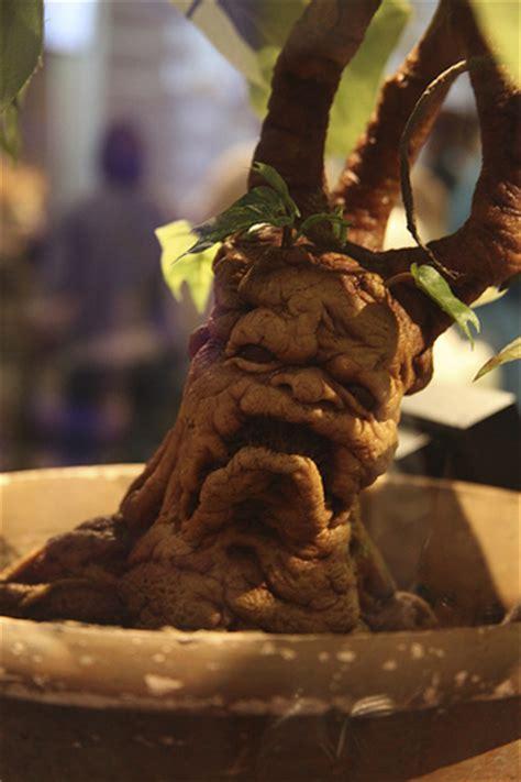 mandrake root flickr photo sharing