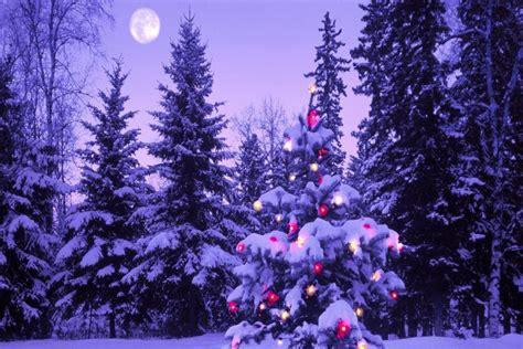 navidad en el bosque 193 rbol de navidad en el bosque 72256