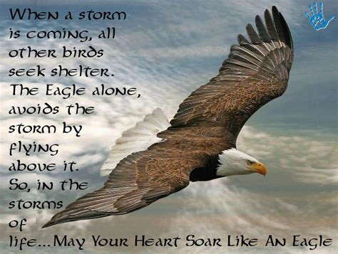 the birds and other when a storm is coming all other birds seek shelter the