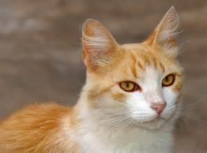 File:Gato (2) REFON.jpg - Wikimedia Commons Gato