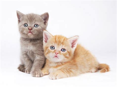 pet cat cats