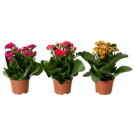 potted plants plants cacti house plants potted plants ikea