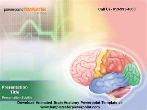 animated brain anatomy powerpoint template