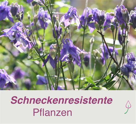Was Tun Gegen Schnaken Im Garten by Die Besten 25 Schnecken Im Garten Ideen Auf