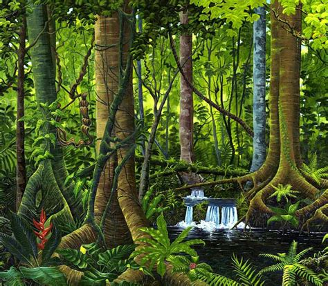 rainforest colors water color forest yahoo image search results