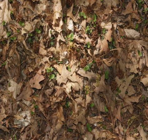 forest floor texture for feralheart by arokaithewolf on