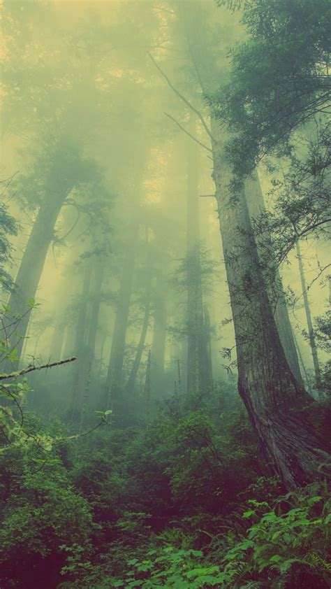 wallpaper forest   wallpaper green fog threes