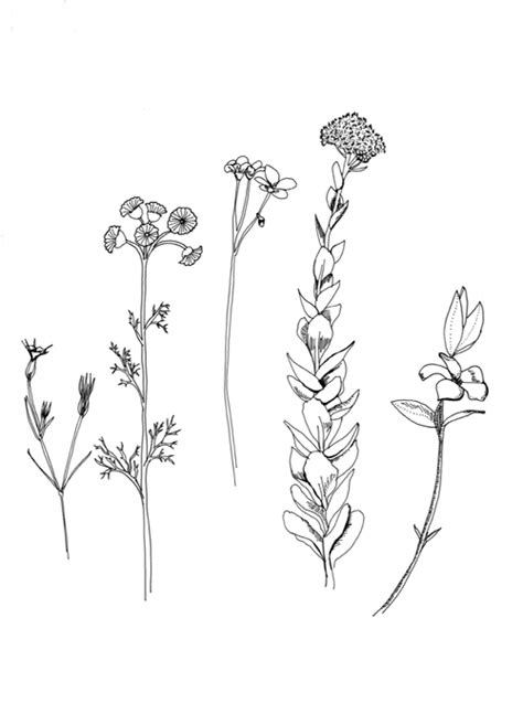 doodle flowers interpretation flowers flower and tatting