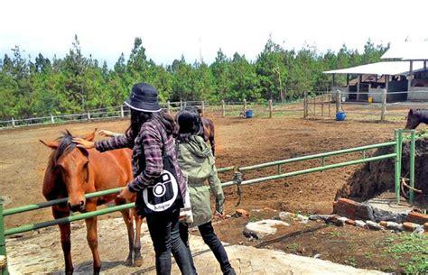 Sho Kuda Di Malang wisata wisata kandang kuda destinasi baru di kota batu malang times