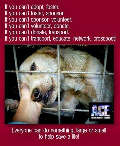 puppy stop and adopt adopt a shelter animal and help stop animal cruelty buddy2blogger