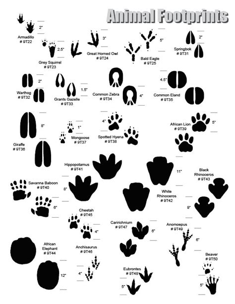 printable animal tracks identification wild animal footprints related keywords wild animal