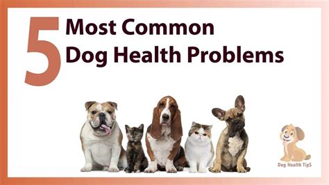 7 Health Conditions That Hit Dogs by 5 Most Common Health Problems Health Tips 2016