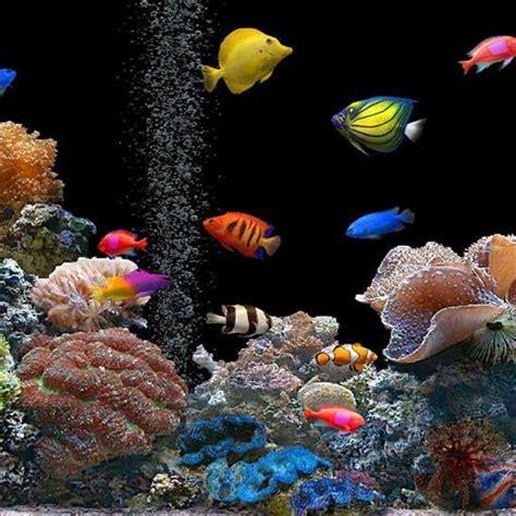 wallpaper animasi android ikan download gratis aquarium wallpaper animasi gratis aquarium
